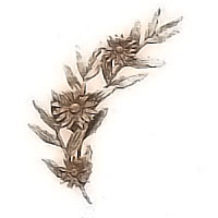 Wall plaque branch with daisies right 15x32cm - 5,9x12,5in Bronze ornament for tombstone 54008