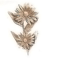 Wall plaque branch with Daisy under the sun 11x16cm - 4,3x6,2in Bronze ornament for tombstone 54010